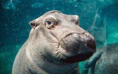 Cincinnati Zoo Offers Closer Look at Animals